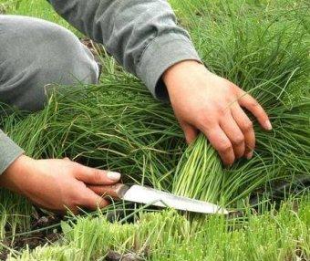 潭州教育,打着教育的幌子割着绿油油的韭菜!